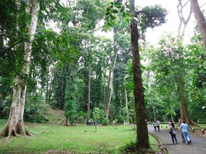 Bogor Botanical Gardens Kebun Raya001