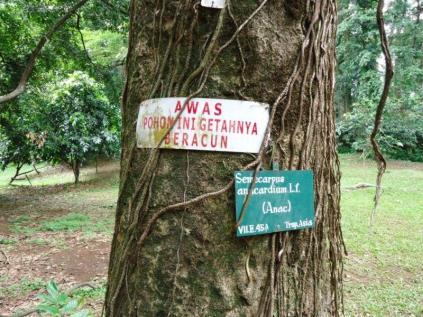 Bogor Botanical Gardens Kebun Raya26