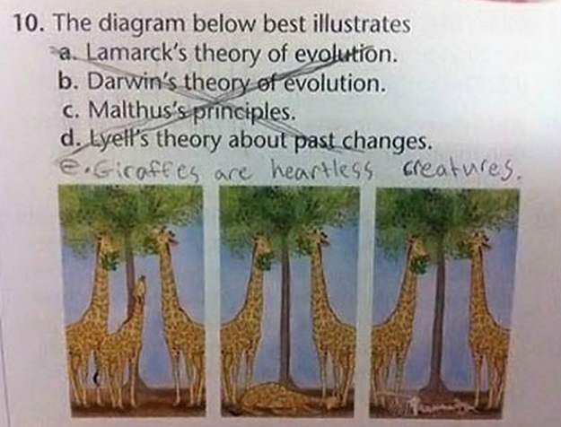 evolution test question