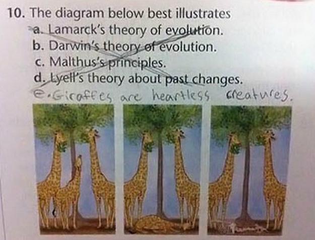 evolution test question